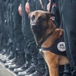 French police dog Diesel dies in Paris anti-terror operation in Saint Denis