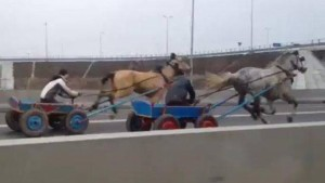 harness racing motorway