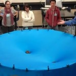 Gravity explained by a trivial experiment (VIDEO)