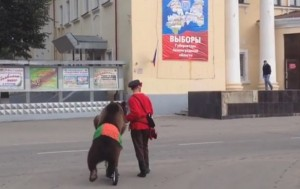 In Russia bears go to vote (pic: youtube/V Sm)