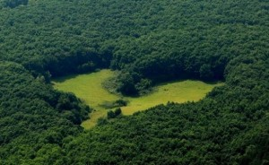 heart-shaped forest glade